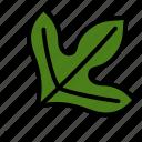 leaf, nature, plant, sassafras, tree
