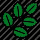 nature, plant, leaf, ash, tree icon