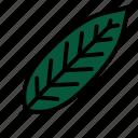 leaf, medlar, nature, plant, tree