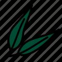eucalyptus, leaf, nature, plant, tree