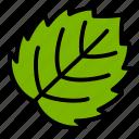 aspen, leaf, nature, plant, tree