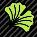 ginkgo, leaf, nature, plant, tree