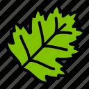 hawthorn, leaf, nature, plant, tree