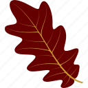 flora, foliage, leaf, leaves, nature, oak, plant icon