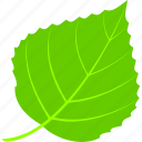 birch, flora, foliage, leaf, leaves, nature, plant icon