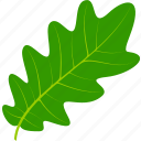 flora, foliage, leaf, leaves, nature, oak, plant