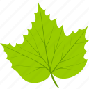 flora, foliage, grape, leaf, leaves, nature, plant