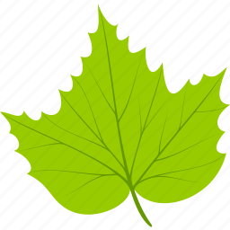 flora, foliage, grape, leaf, leaves, nature, plant icon