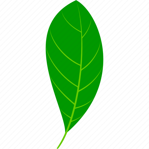 flora, foliage, leaf, leaves, nature, plant, tea icon
