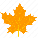 flora, foliage, leaf, leaves, maple, nature, plant