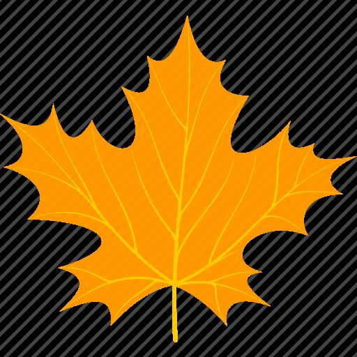 flora, foliage, leaf, leaves, maple, nature, plant icon