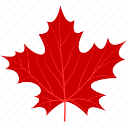 flora, foliage, leaf, leaves, maple, nature, plant icon