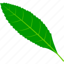 coffee, flora, foliage, leaf, leaves, nature, plant