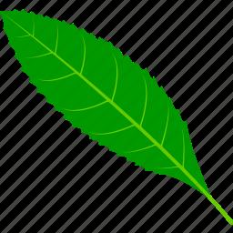 coffee, flora, foliage, leaf, leaves, nature, plant icon
