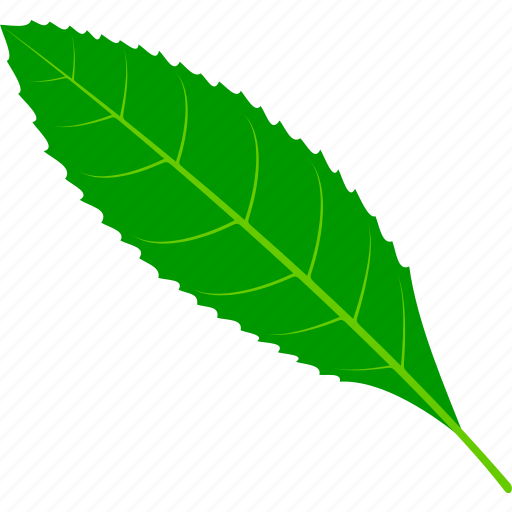 coffee, flora, foliage, leaf, leaves, nature, plant icon