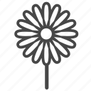 blossom, botany, chamomile, daisy, floral, flower, wildflower icon