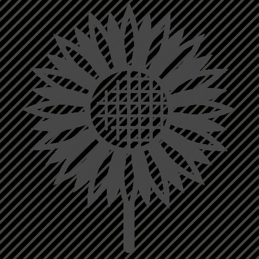 bloom, blossom, flower, flowers, garden, summer, sunflower icon