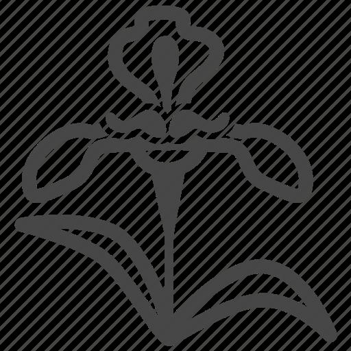 botany, flora, flower, flowering, garden, iris, plant icon