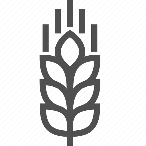 food, gmo, healthy, modified, plant, spica, wheat icon