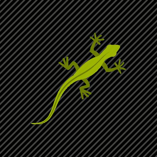 amphibia, amphibian, lizard, reptile, species, water, wild icon