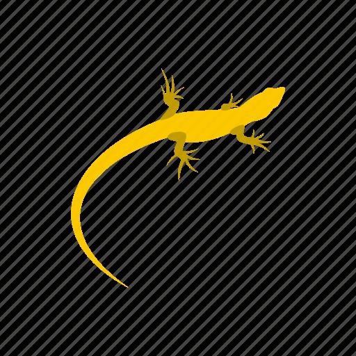 amphibia, amphibian, reptile, salamandridae, triton, water, wild icon