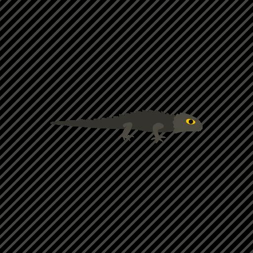 amphibia, amphibian, anderson, crocodile, newt, reptile, salamander icon
