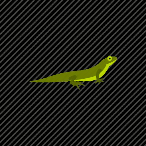 amphibia, amphibian, reptile, species, triton, water, wild icon
