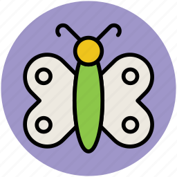 butterfly, flying object, garden, insect, violet icon