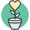heart flowers, love, love concept, plant, romantic icon