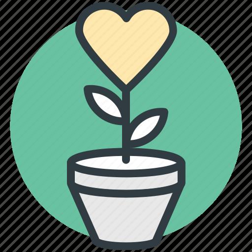 heart flowers, love, love concept, plant, romantic icon