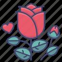 flower, love, red, rose