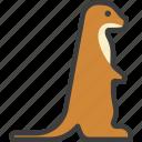 meerkat, mongoose, suricate