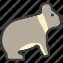 australian, bear, koala icon