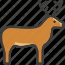 deer, elk, reindeer, stag icon