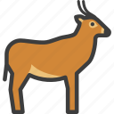 african, animal, antelope, gazelle