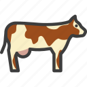 bovine, cattle, cow