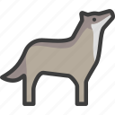 coyote, gray, timber, wolf icon