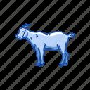 animals, caprinae, domestic goat, goat, goat - antelope, mammal, wild goat