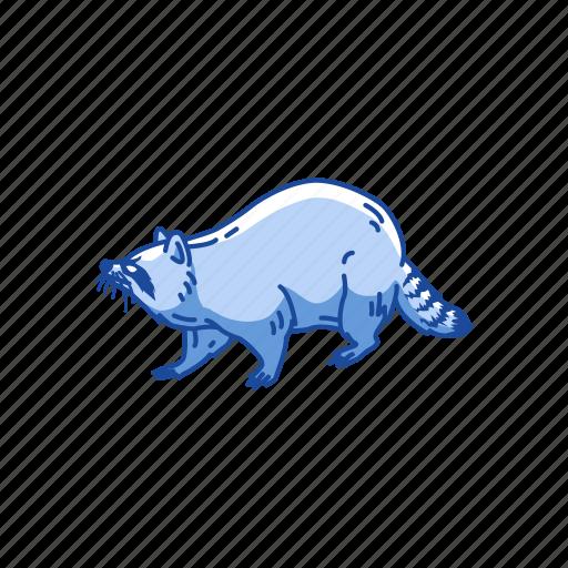 animal, coon, mammal, pest, raccoon, racoon icon