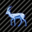 animal, antelope, gazalle, hart mountain antelope, invertebrate, mammal