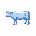 animals, cattle, cow, dairy animals, mammal, taurine cattle icon