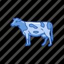 animals, cattle, cow, dairy animals, domestic animal, mammal