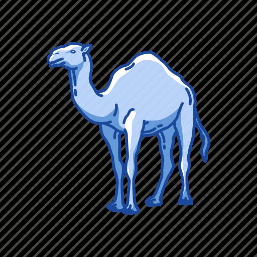 animal, arabian camel, camel, domestic animal, dromedary, mammal icon
