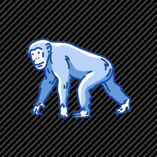 animals, ape, bonobo, chimpanzee, chimps, mammal icon