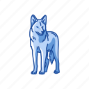 animal, brush wolf, canine, gray wolf, male coyote, mammal, wolf icon