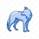 animals, brush wolf, canine, coyote, gray coyote, mammal, wolf