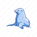 animal, aquatic animal, mammal, pinnipeds, sea lion, seal