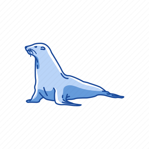 animal, aquatic animal, mammal, pinnipeds, sea lion, seal icon