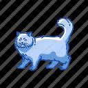 animals, cat, feline, kitten, mammal, persian cat, shirazi cat icon