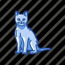 animals, cat, feline, kitten, mammal, pet, savannah cat icon